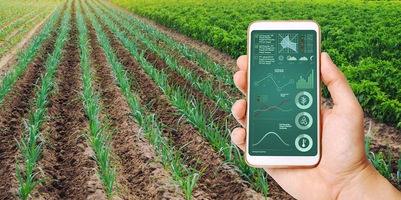A hand is holding a smartphone with infographics on the background of field of young green leek plantations. innovative technologies, data analyzing on plants status. Growing vegetables, Agribusiness